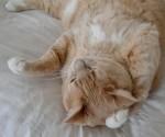 n猫、リラックスa1180_005145