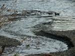k川、蛇行する川a0960_002506
