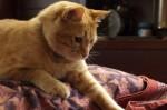 n猫a0016_000165
