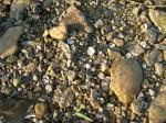 i石、大小さまざまa0830_000140