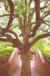 k木、枝分かれa1620_000382