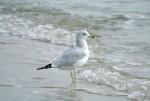 n波と鳥a1180_006710